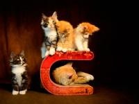 Vorschau: cat-on Le Tonneau |Kratzmöbel für Katzen