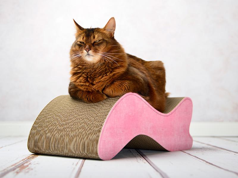 cat-on Geschenkgutschein 5,00 € |Geschenk-Gutscheine verschenken