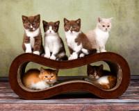 Vorschau: Dunkelbraune Kratzwelle für Katzen SIngha M