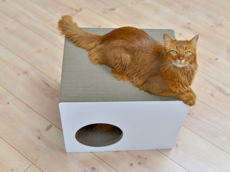 cat-on cat scratching furniture - timeless, classic design for cats