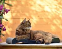 La Ola cardboard cat scratcher