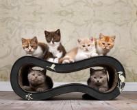 Vorschau: Singha M Design Katzenmöbel