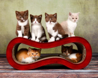 Vorschau: Design Katzenmöbel Singha M aus Wellpappe in dunkelrot