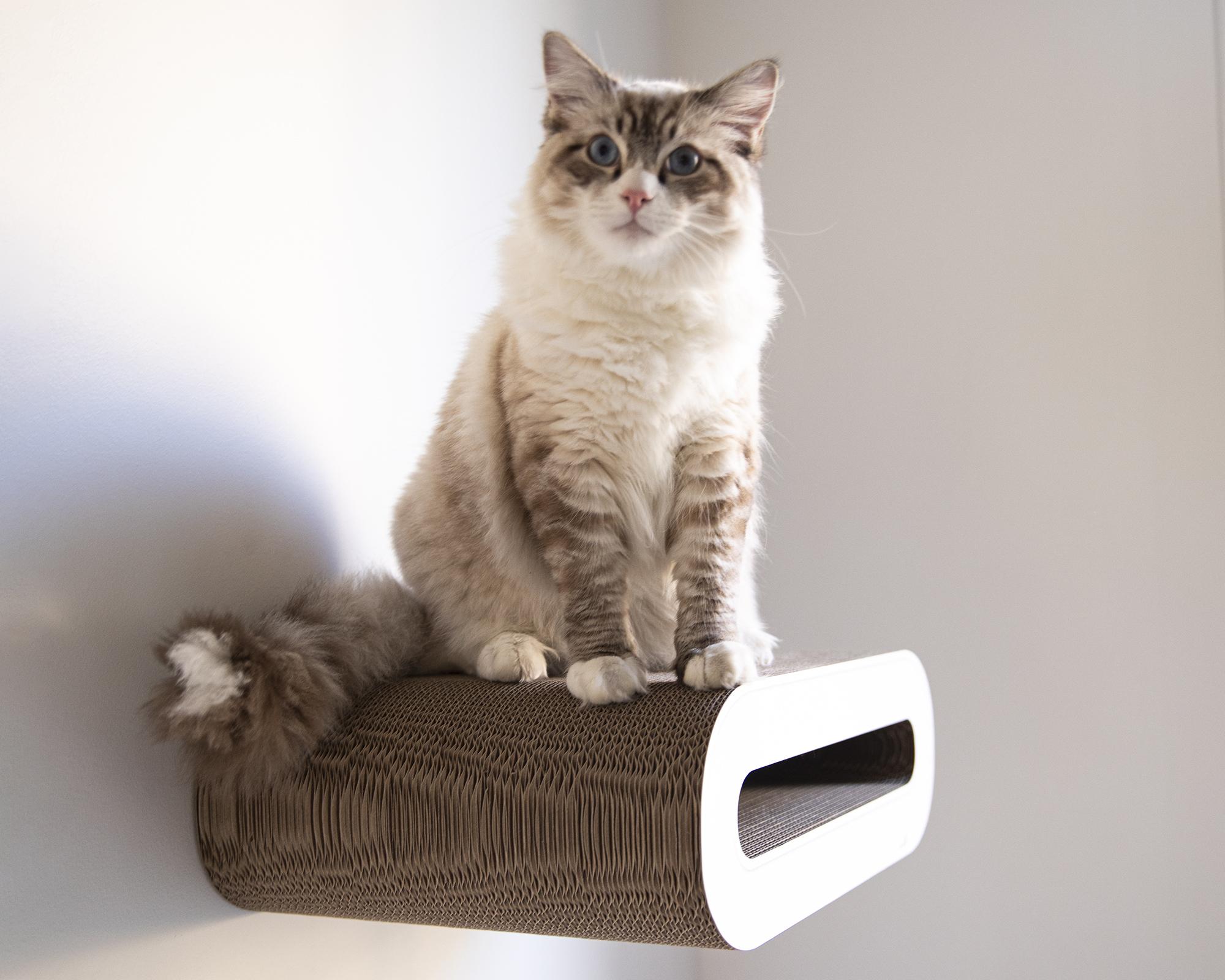 Le Rouleau wall-kit cat shelve