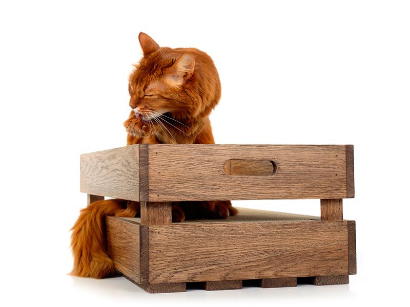 Katzenstiege in Eiche - Öl: Nussbaum | Kratzkiste mit Kratzeinlage aus Wellpappe