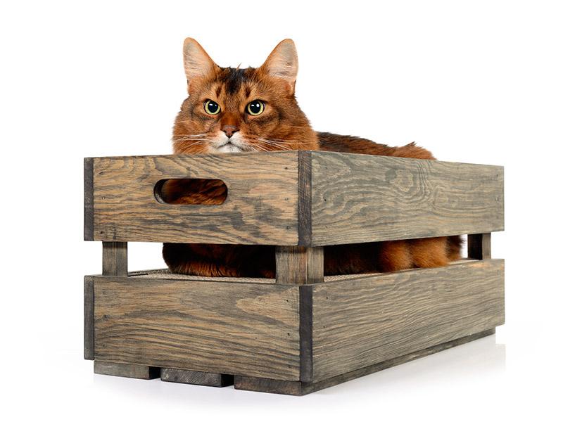 Katzenstige aus Fichte - in Basalt geölt - Vintage Look