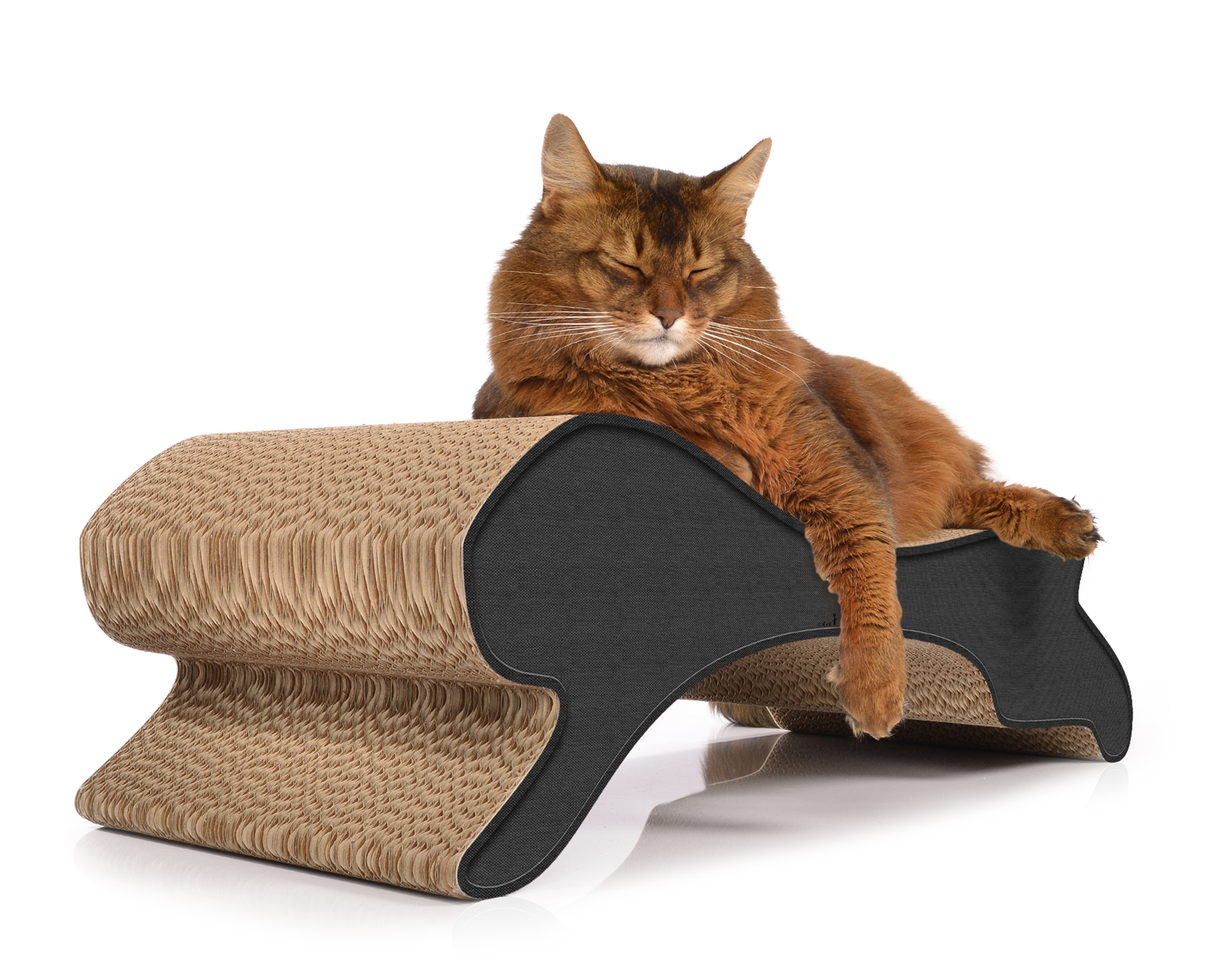 Motion design cat scratcher