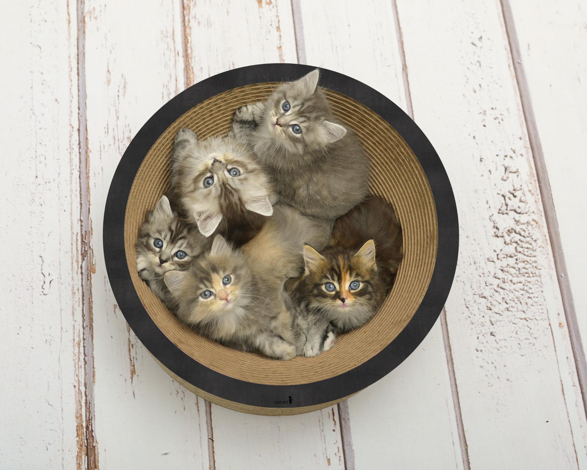 La Coupe Katzenschale