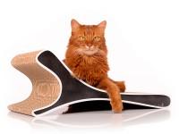 cat-on cat scratcher Feline