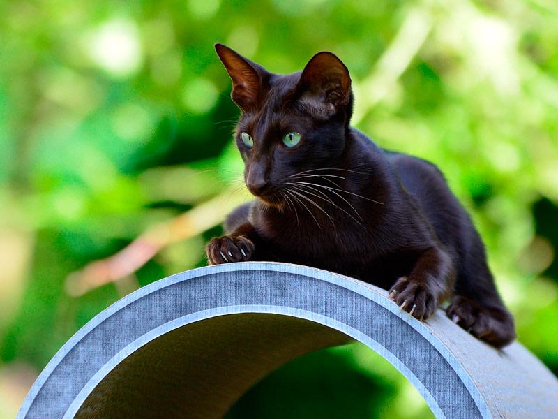 cat scratching furniture Rond Point | cardboard cat tree