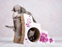 Lescalier - cat stairs for disabled or elder cats - ataxia stairs for cats