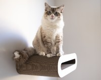 Le Rouleau wall-kit cat shelve