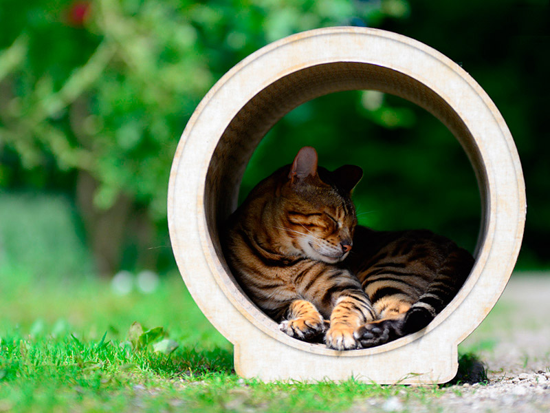 cat tree Le Rond | cat scratching furniture