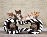 Vorschau: Design Kratzmöbel Für Katzen Singha M - schwarz-weisses Zebra-Muster