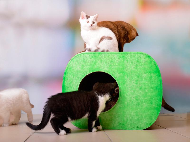 cat-on Brochhaus Junior | cat house | cardboard cat scratcher