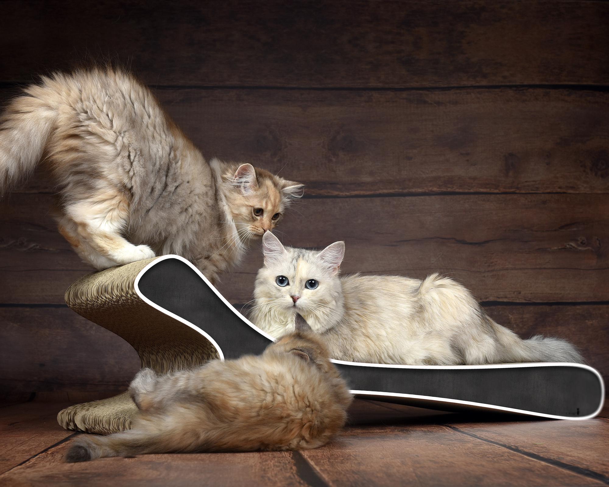 Kratzmöbel Feline XL für alle Katzengrößen geeignet in schwarz
