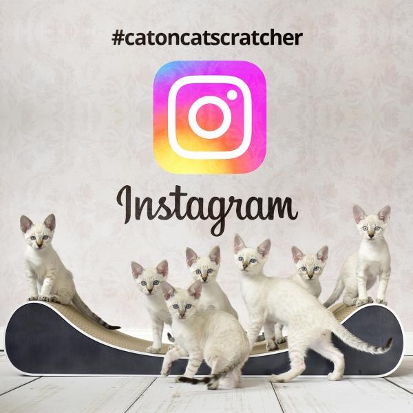 instagram-catoncatscratcher