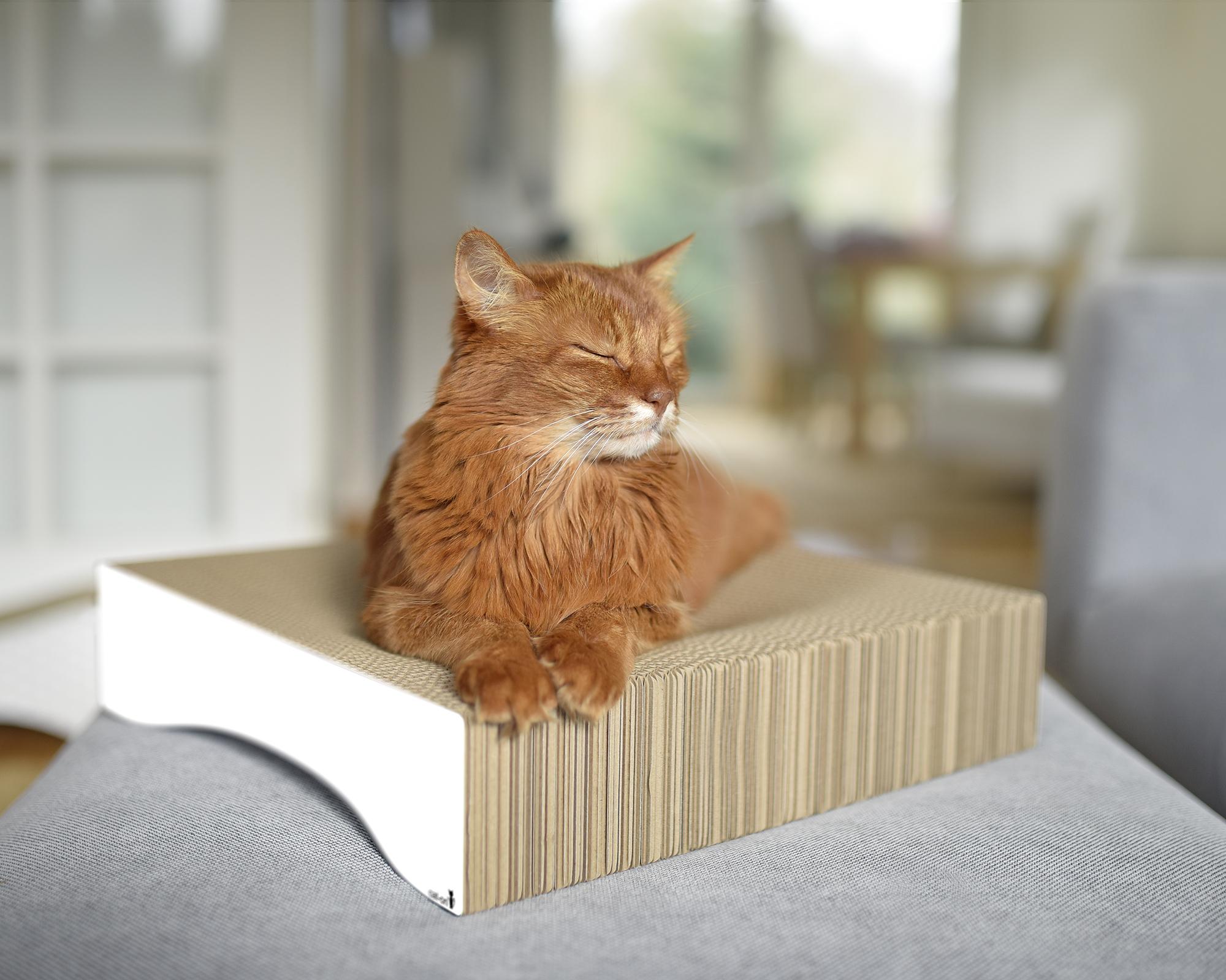 Katzenschale Le Moule M |Liegemulde für Katzen