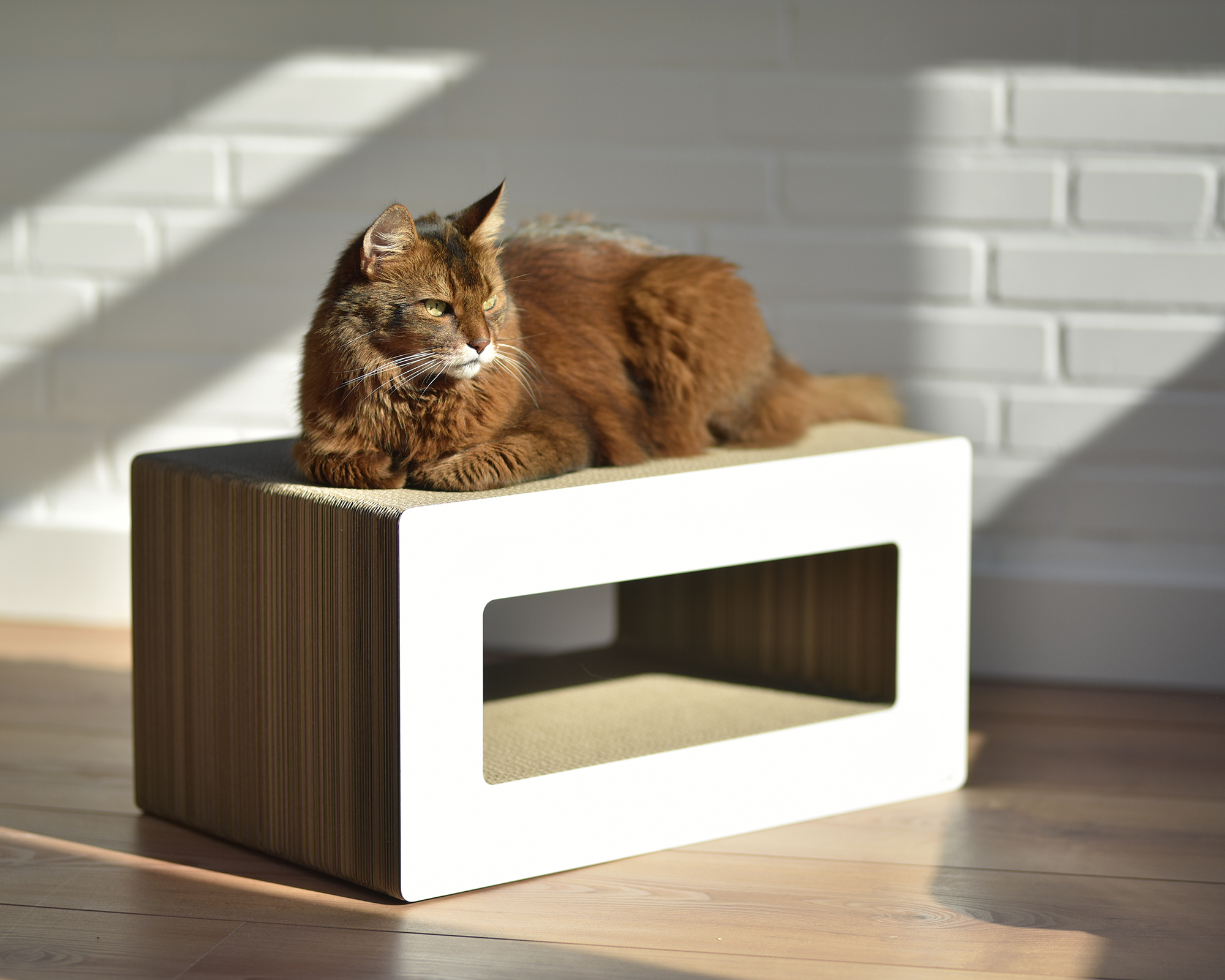 LOOP - cardboard cat scratcher in white - Made in Germany