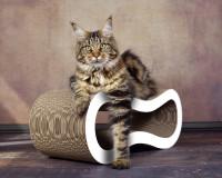 Vorschau: Design Kratzbaum Singha M aus Wellpappe Made in Germany
