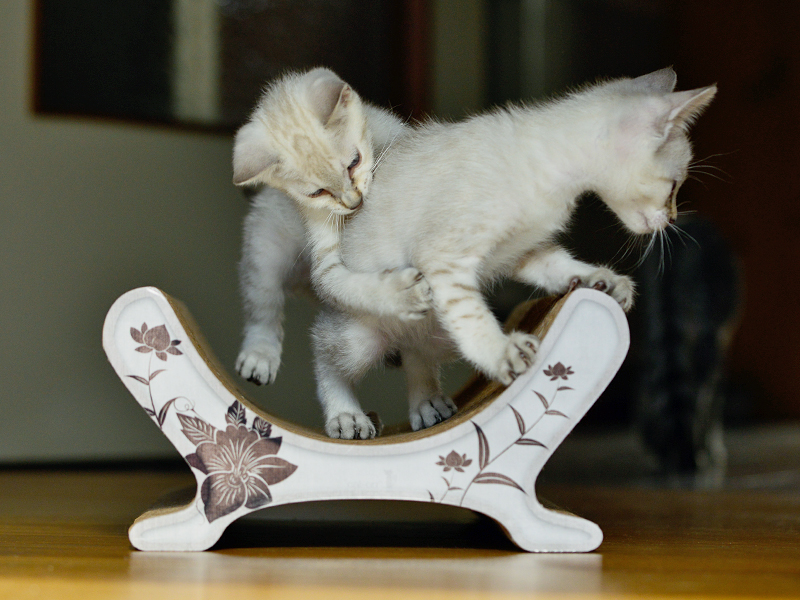 cardboard cat scratcher Le Panier