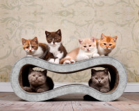 Vorschau: hellgraues Kratzmöbel für Katzen aus Wellpappe Singha M