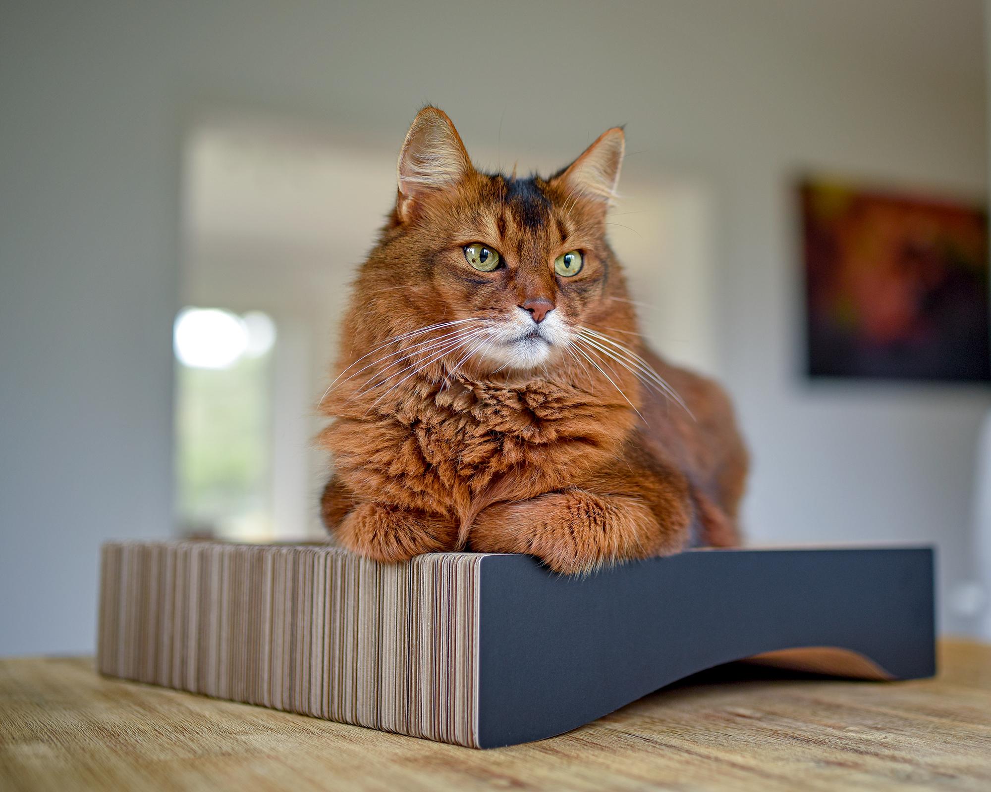 grattoir à chat en carton ondulé qualité allemande
