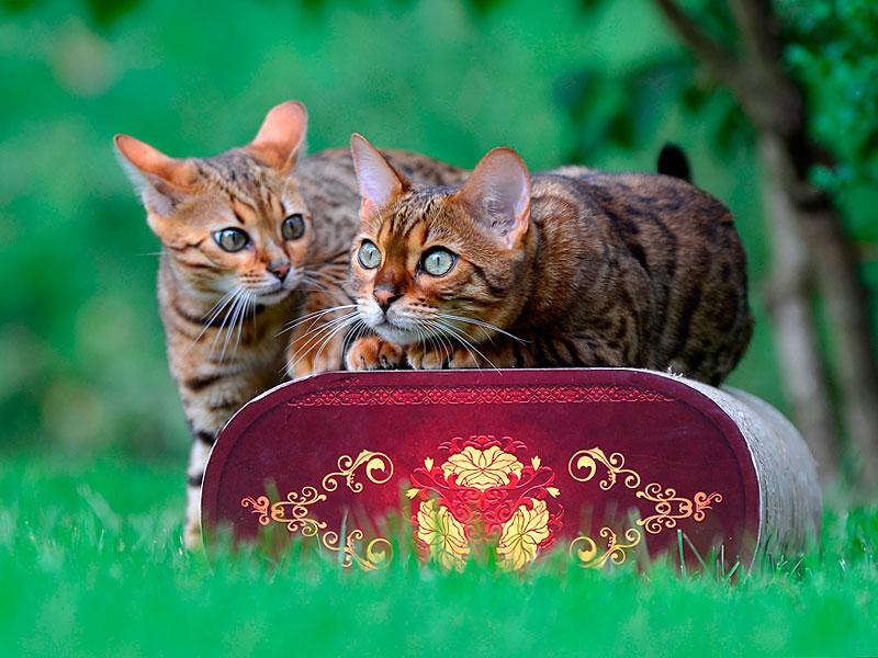 Kratzpappe für Katzen aus deutscher Herstellung
