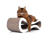 Kratzbaum für Katzen: cat-on Cat Racer