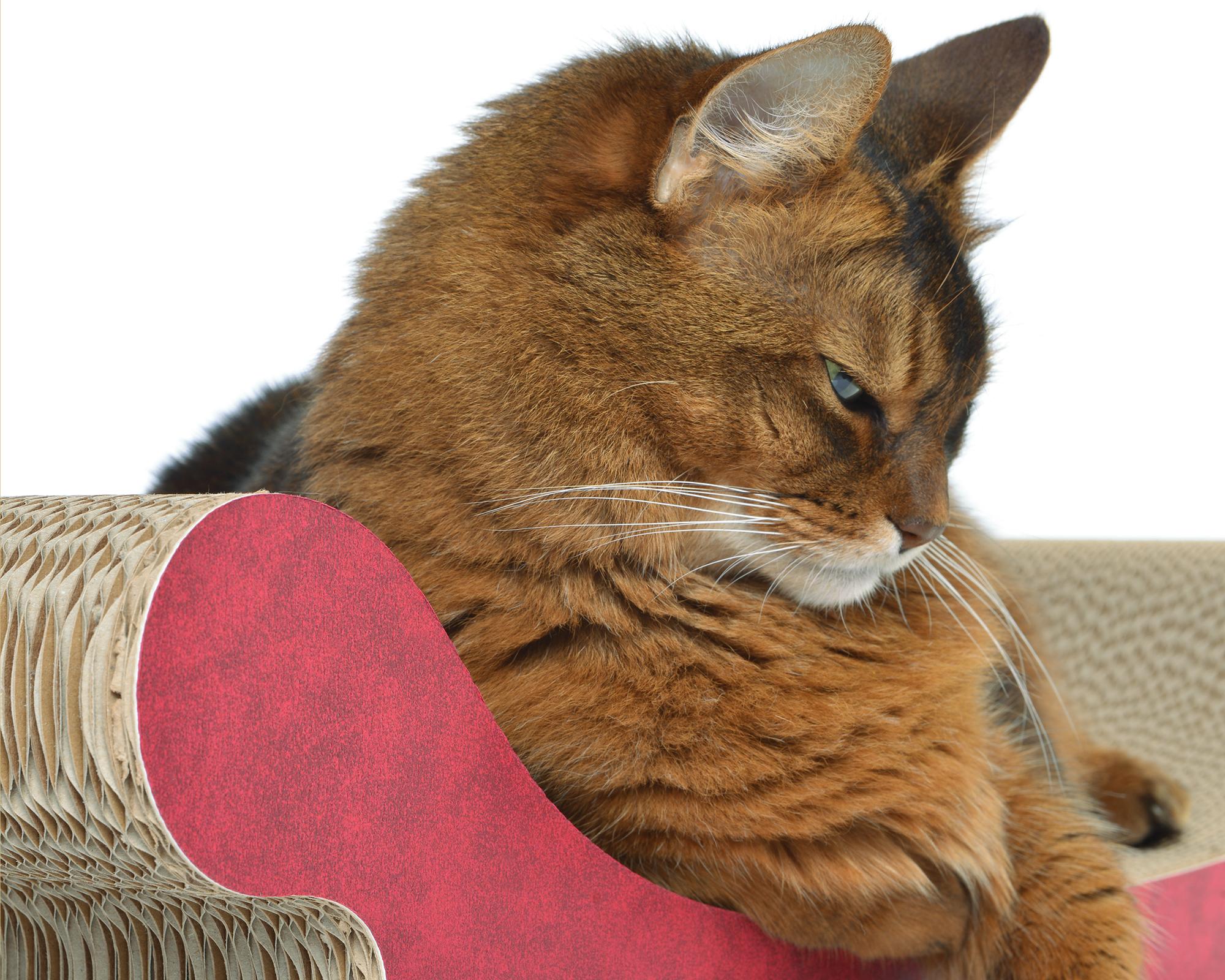 Hochwertige, FSC-zertifizierte Papierapplikationen |Katzenmöbel