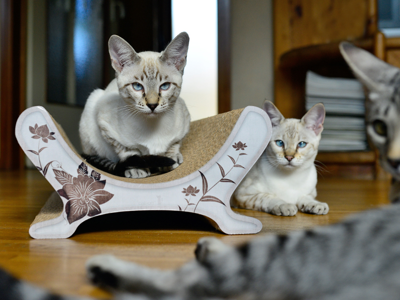 Lounger for cats Le Panier