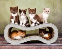 Vorschau: Katzenkratzmöbel aus Wellpappe Singha M in grau meliert