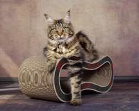 Vorschau: Design Katzenmöbel Made in Germany - Singha M - Farbe 008 - schwarz - rot - beige