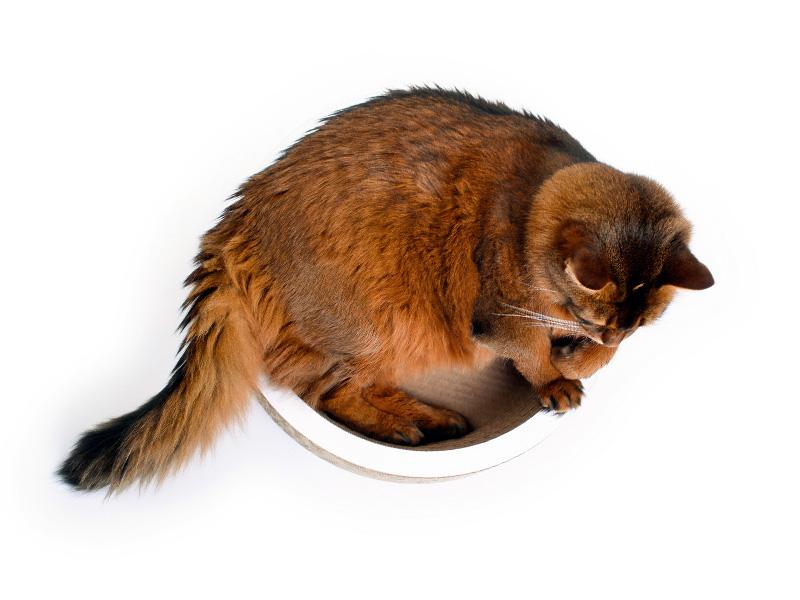 Katzenschale La Coupe