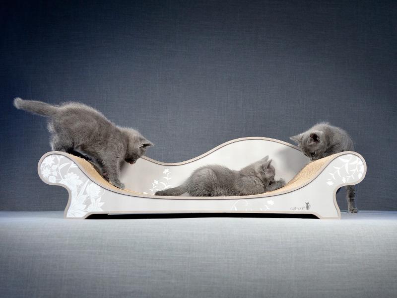 Kratzbrett & Katzensofa mit Chartreux Kitten