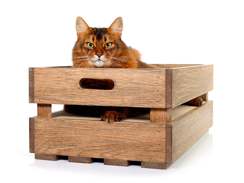 cat-on cat crate |scratching box made of oak with corrugated board