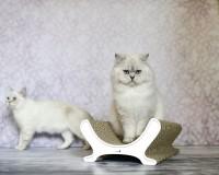 Kratzmöbel und Katzenbett Le Panier in weiss 000