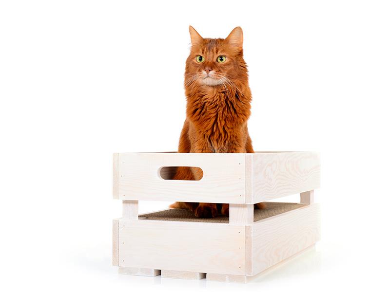 Holzkiste mit Kratzpappe - cat-on Katzenstiege S