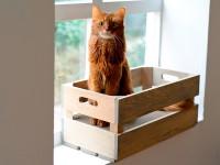 Kratzkiste in Fichte - Steingrau | Katzenstiege mit Kratzpappe