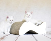 white cardboard scratch post Kabou