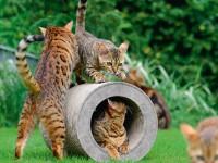 Vorschau: Kratztunnel cat-on Le Tube für Katzen