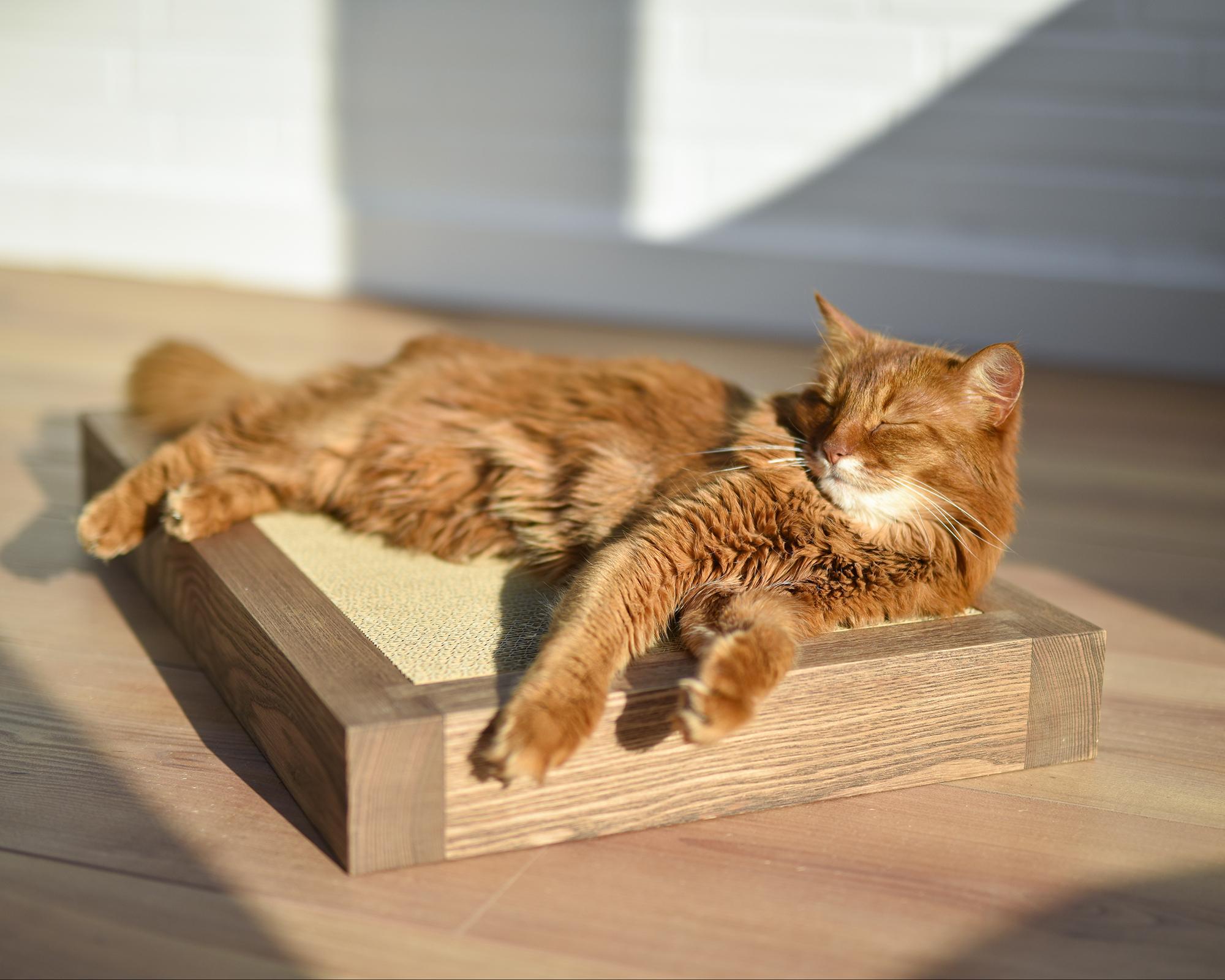 Boisé cat scratcher