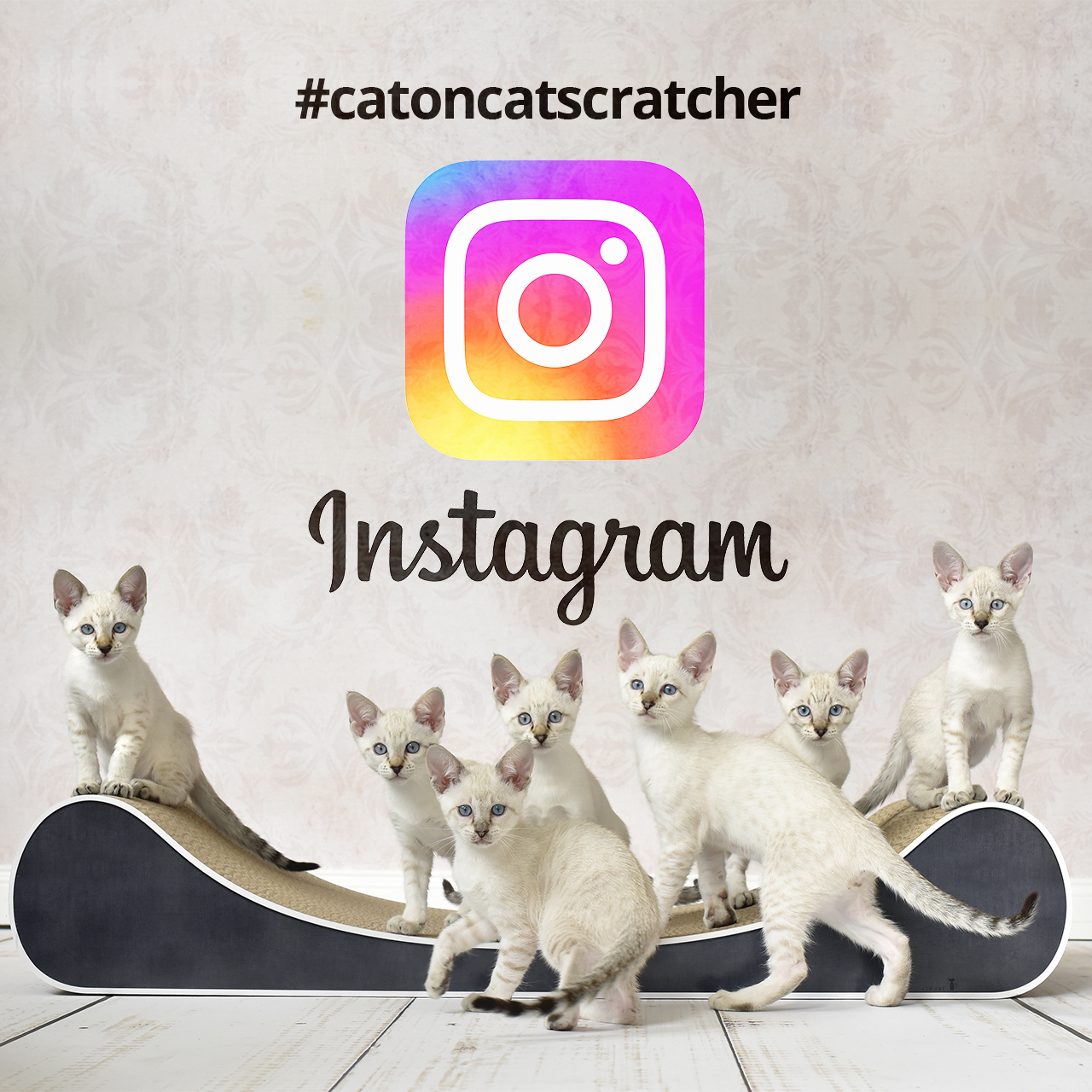caton Instagram