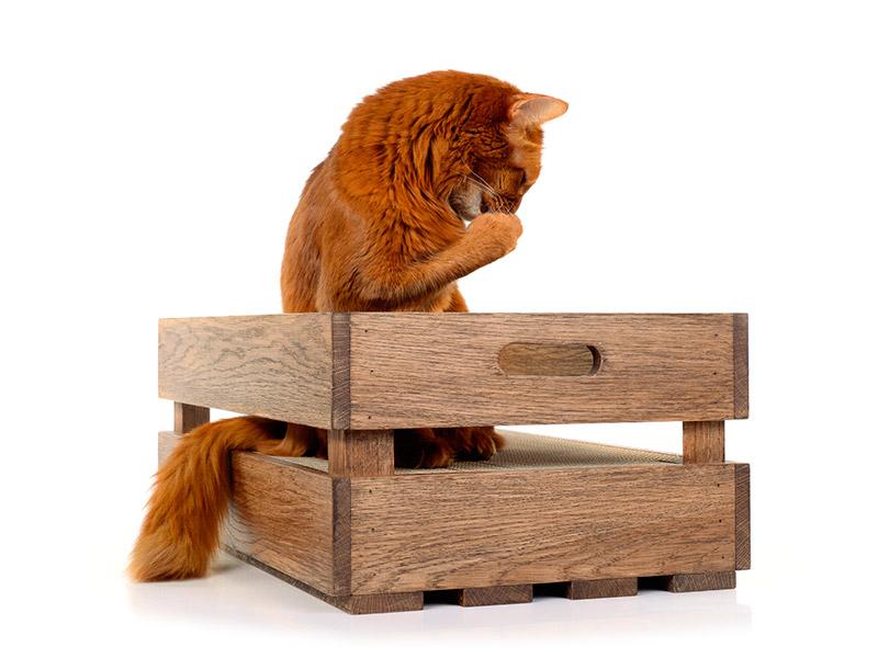 Katzenstiege - die ultimative Kratzkiste aus Holz und Pappe
