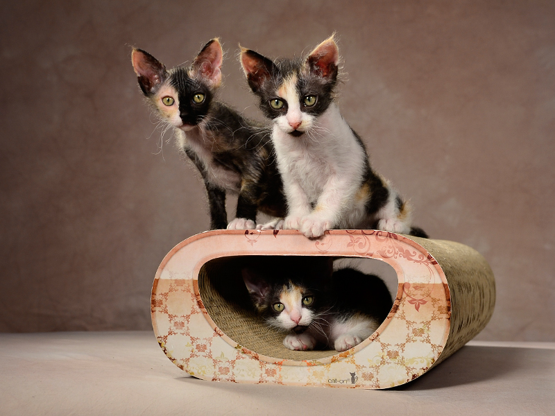 cardboard cat furniture and scratch post Le Tunnel | Designed & Handmade in Germany