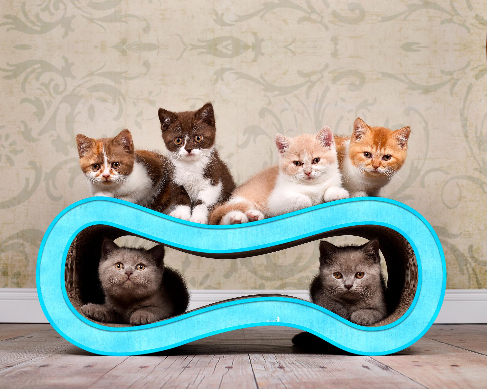 Möbel aus Pappe für Katzen Singha M - Farbe: hellblau 006d
