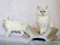 Katzenliege Le Panier