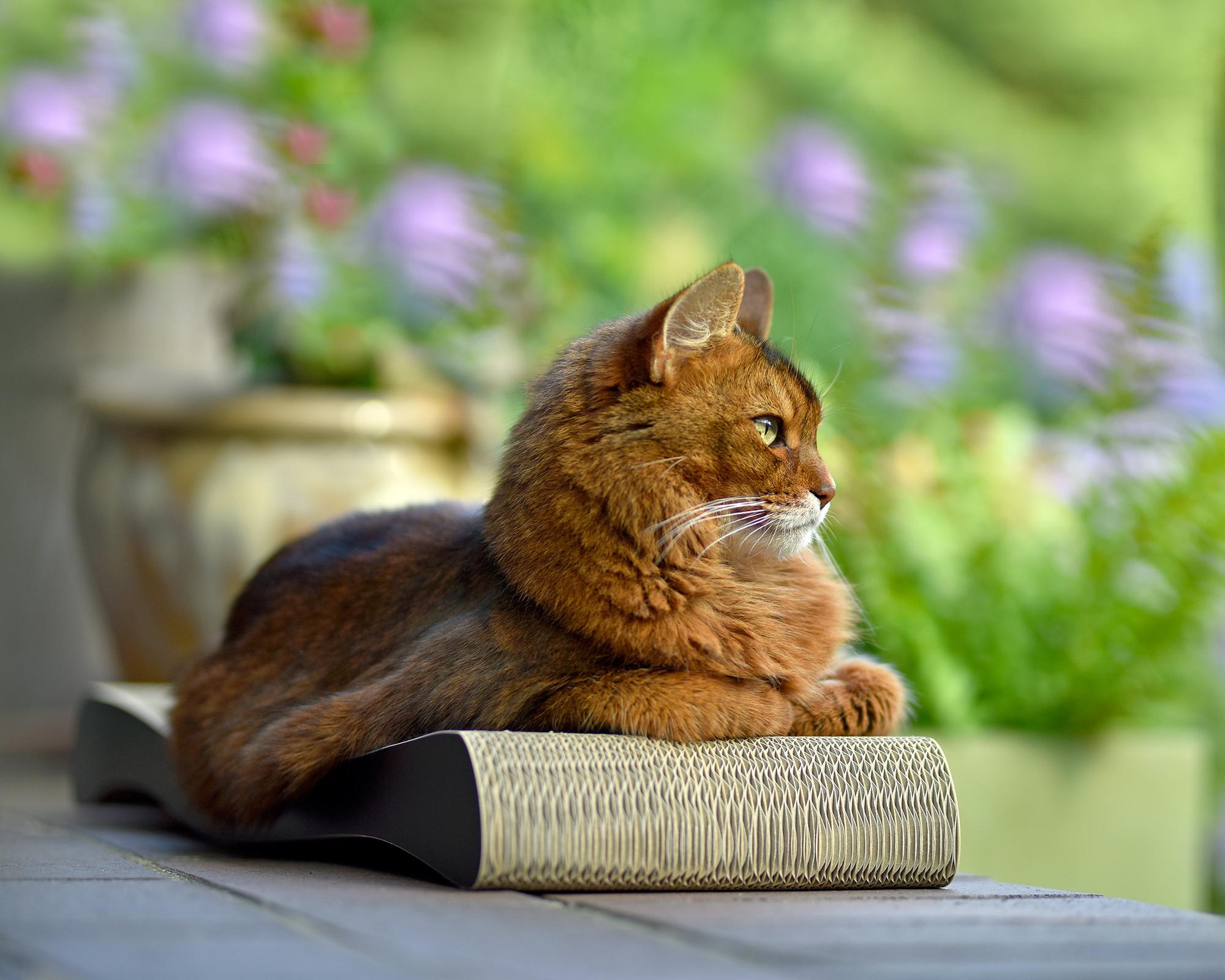 Kratzbrett & Kratzwelle für Katzen La Ola in gestrichen schwarz 013x