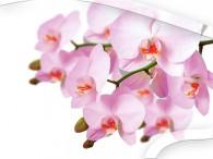 0050-Orchidee