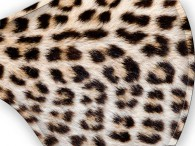 0052-Cheetah